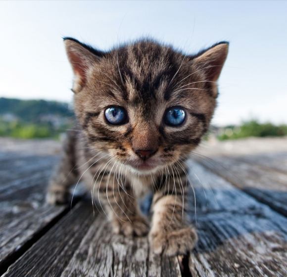 kittyeeh
