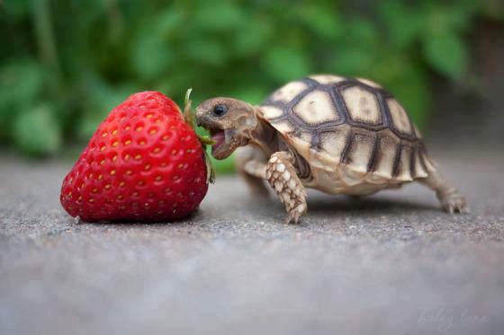 turtle-baby