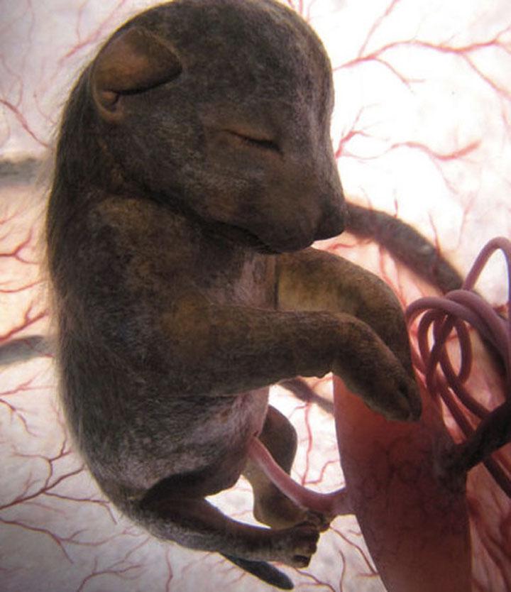 animals_in_utero_10